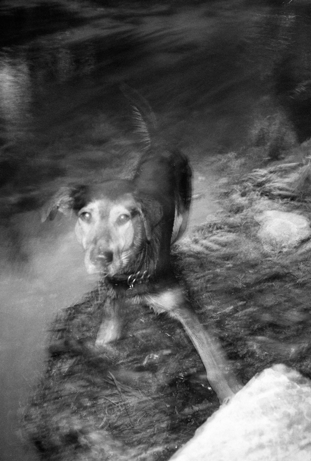 The Lurcher, Isle sur la Sorgue