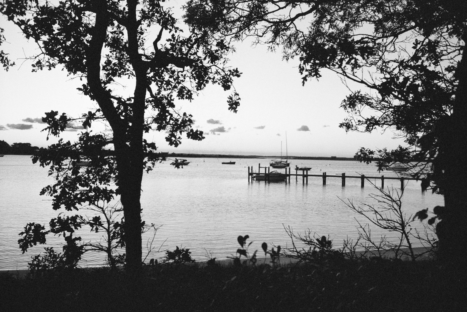 Dock and Trees, Lake Tashmoo, Martha