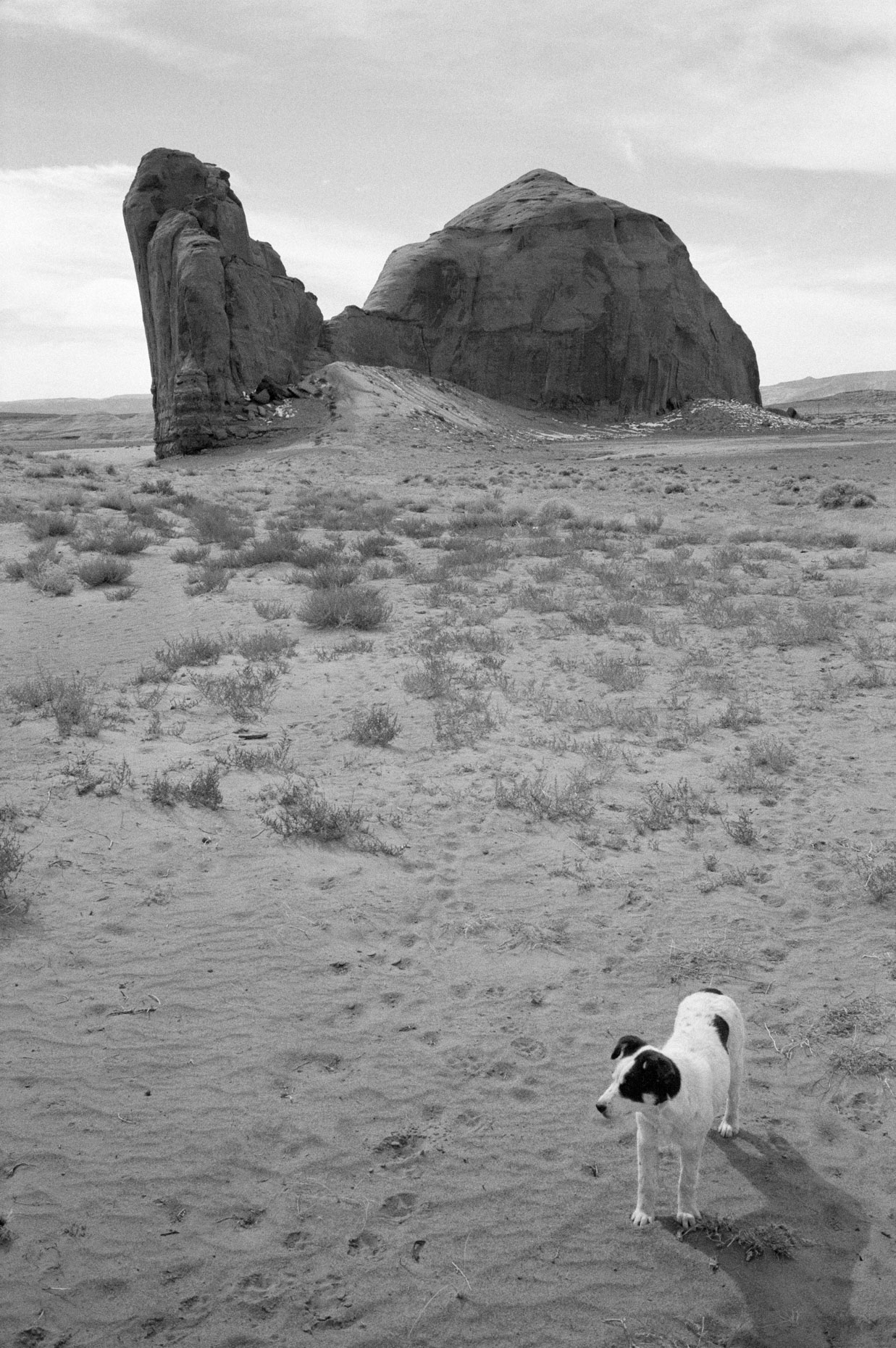 Rock Formation and Dog, Monument Valley