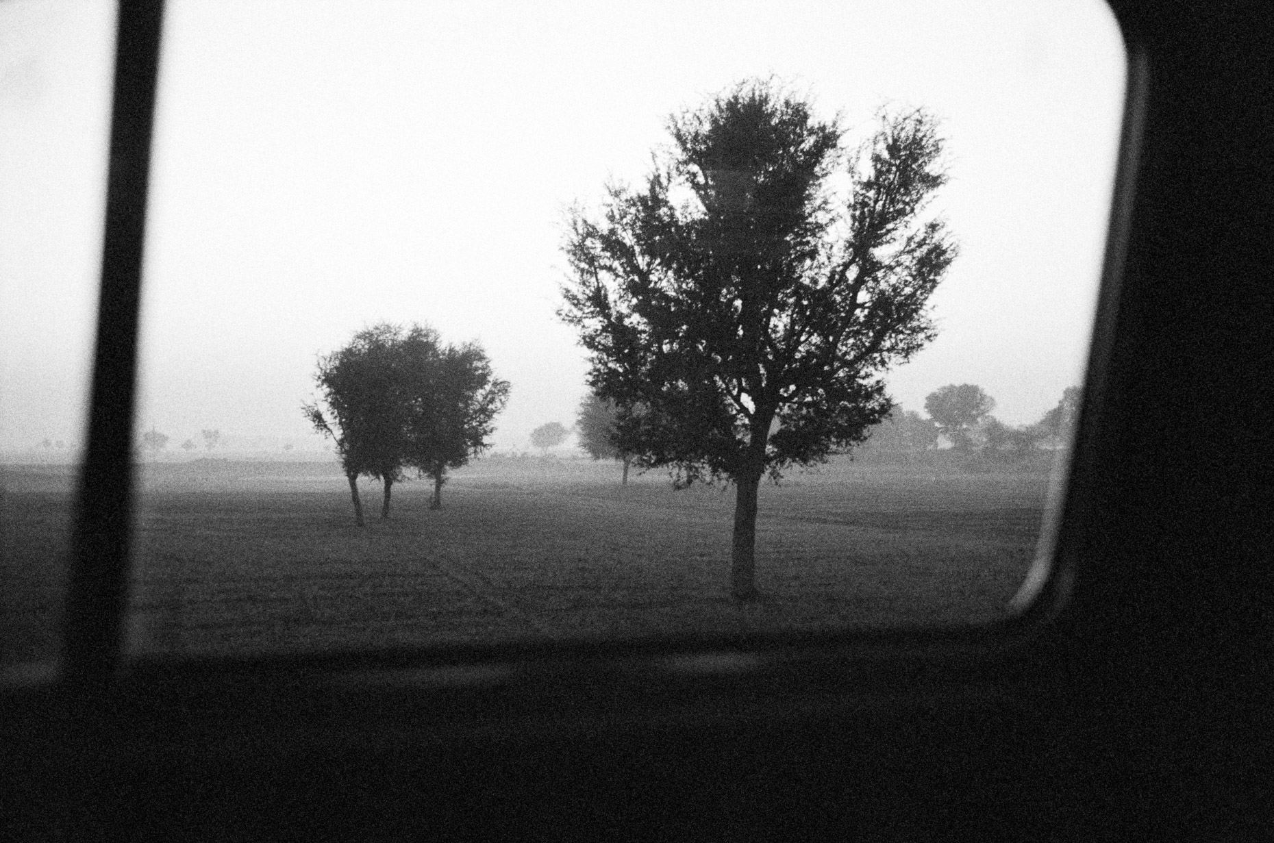 Trees at Dawn on the road to Jodhpur