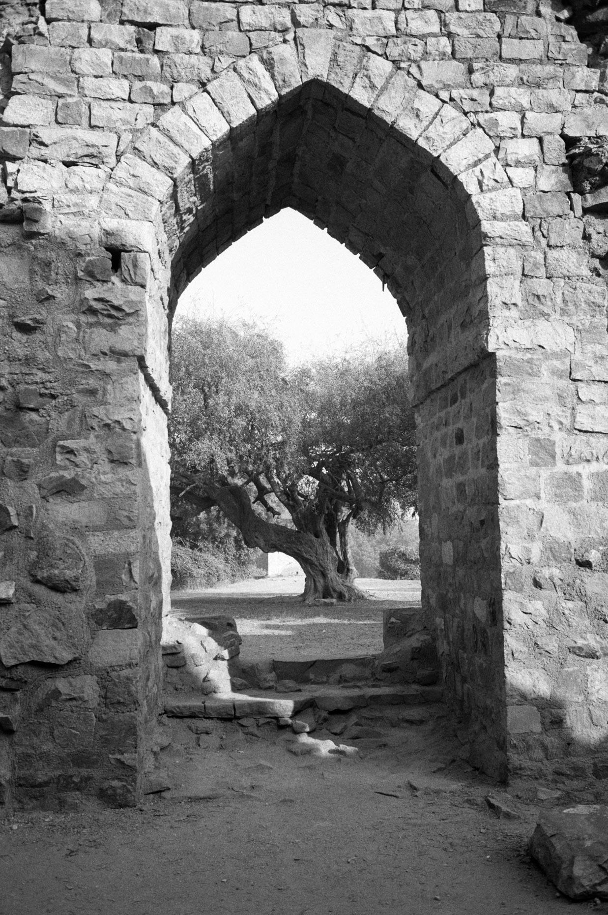 Tree through Arch, Qutab Minar, Delhi