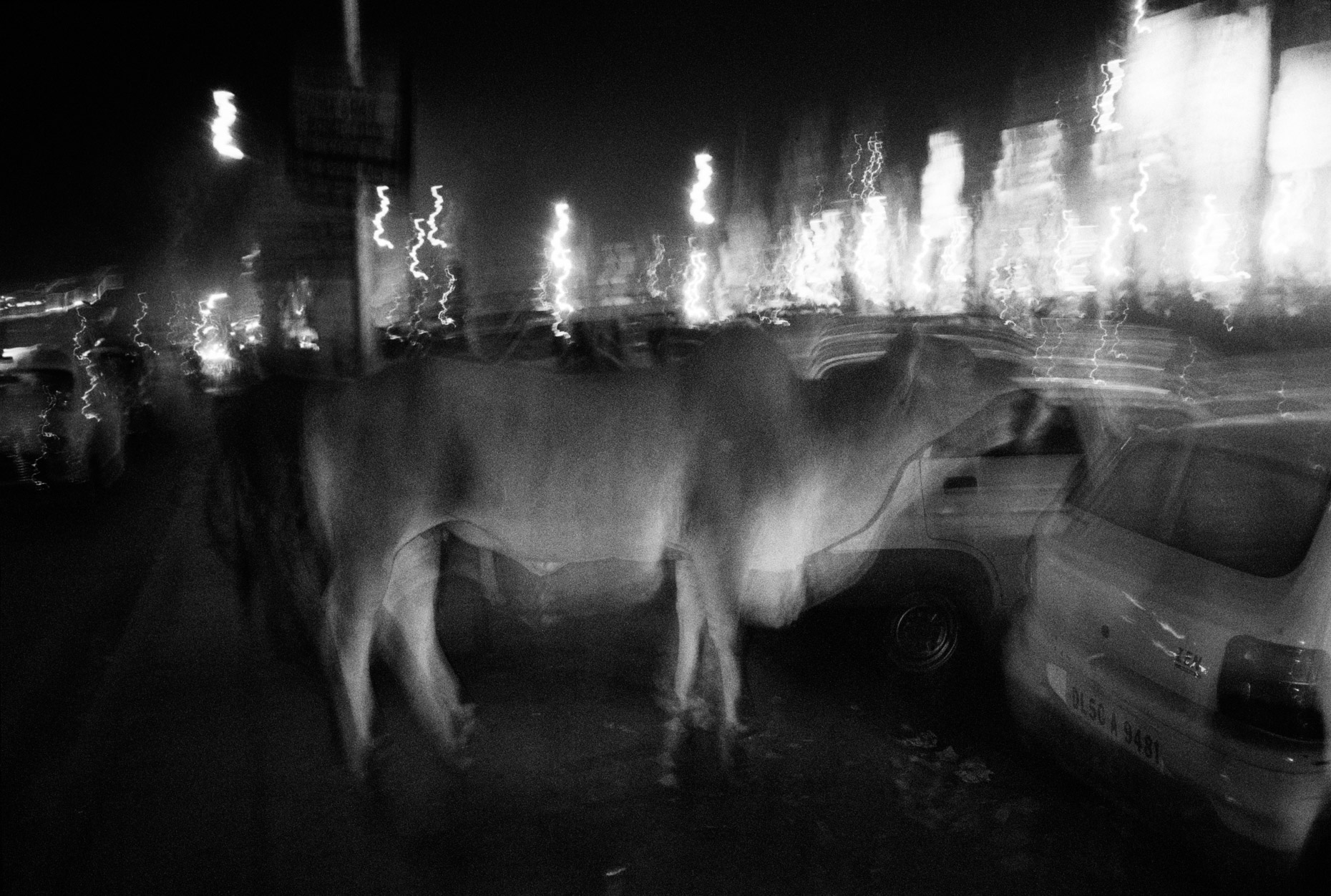 Flaming Cow, Delhi