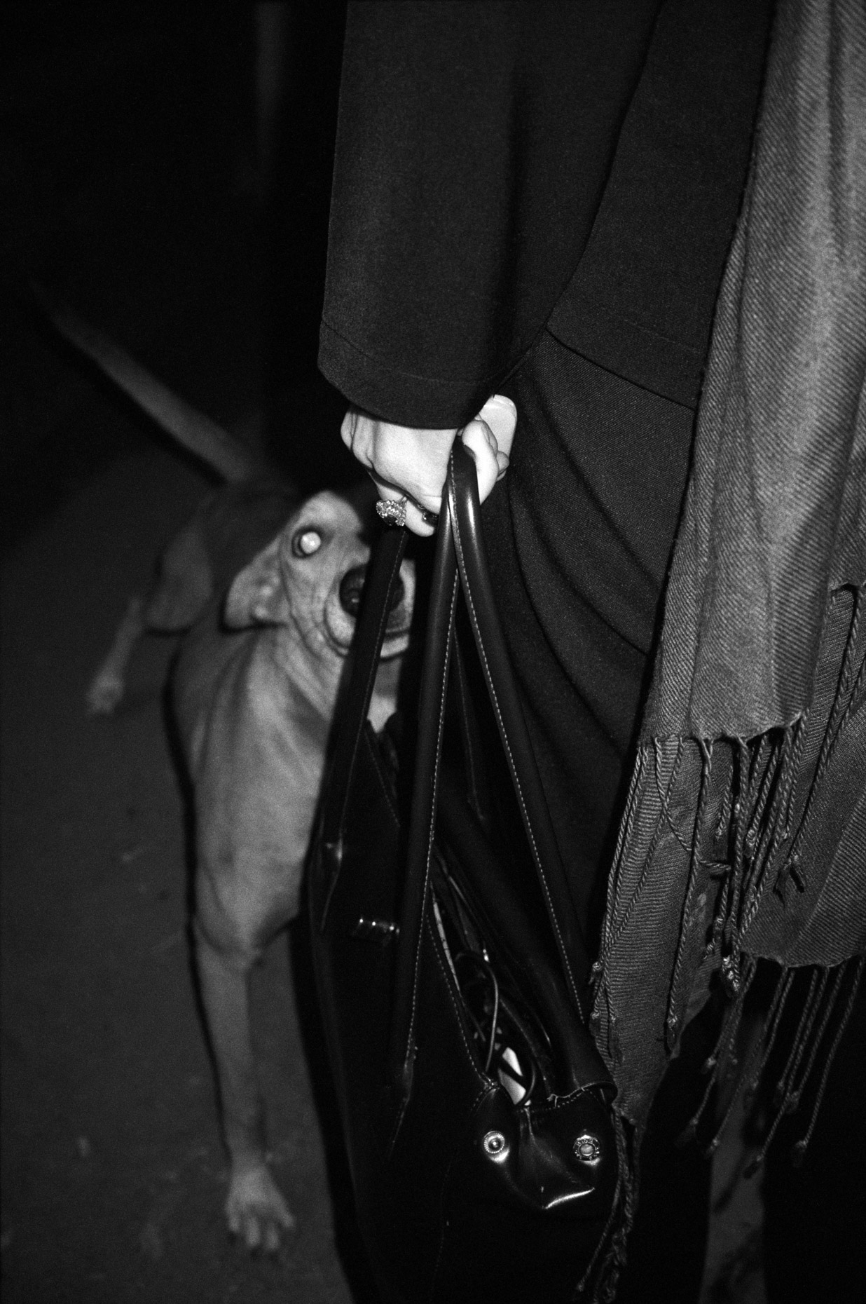 Dog and Handbag, Delhi