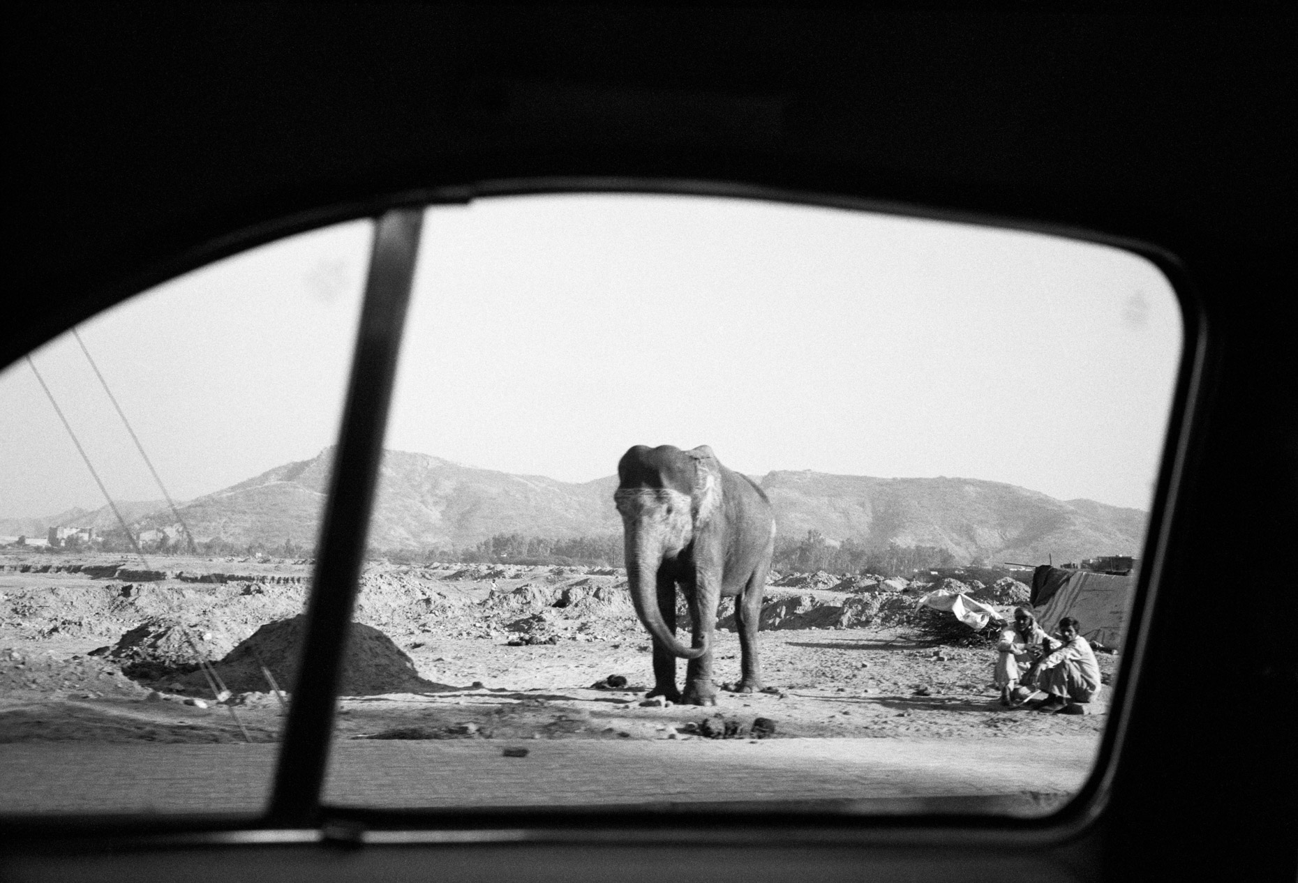 Elephant on Amber Road, Jaipur