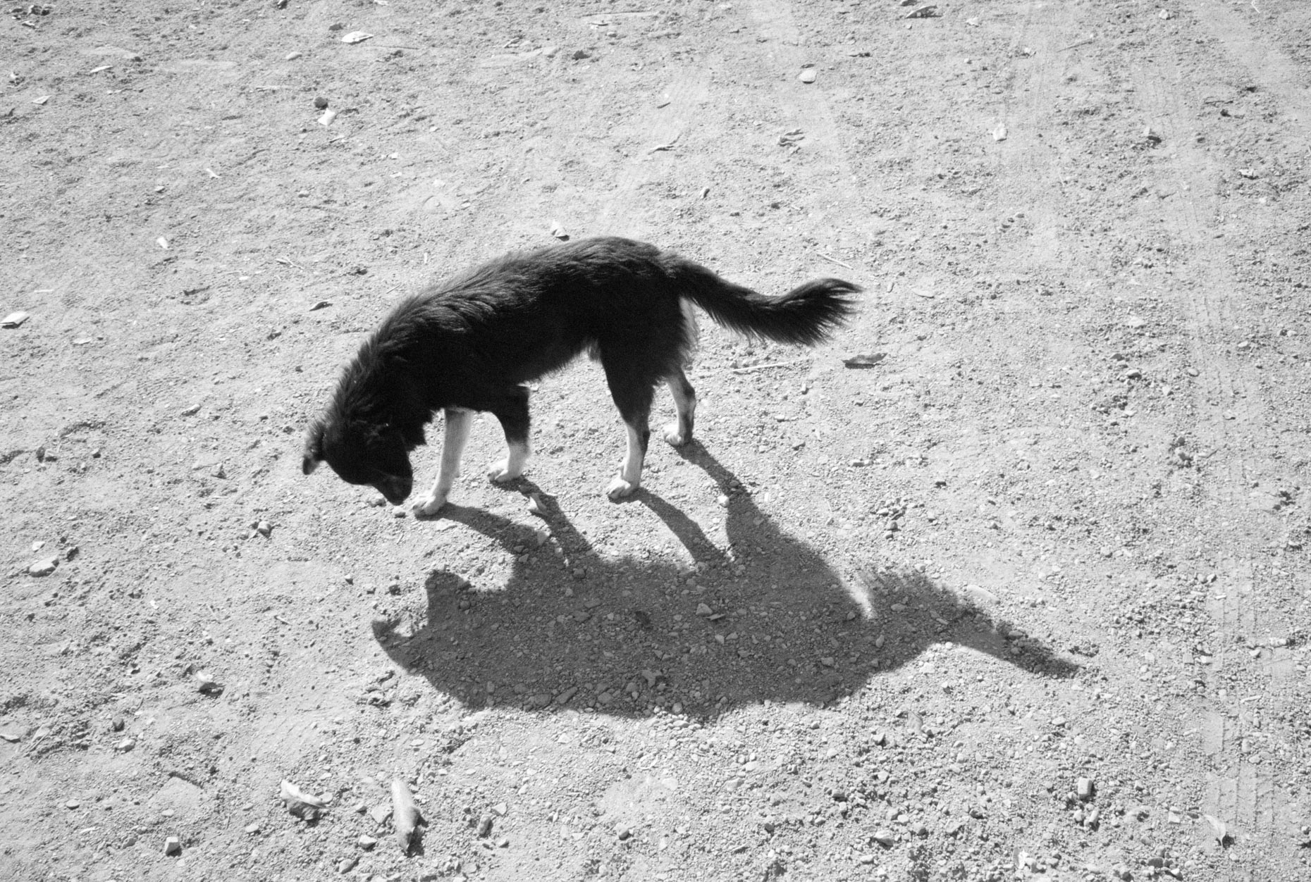 Dog Shadow, Rishikesh